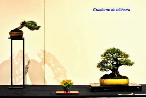 Melhor Composição - Rui Ferreira